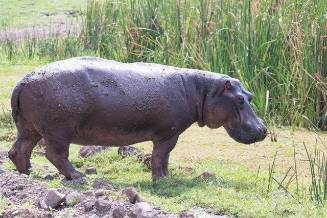 safari lago manyara tanzania (21)