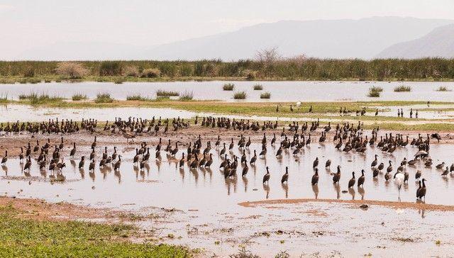 safari lago manyara tanzania (22)