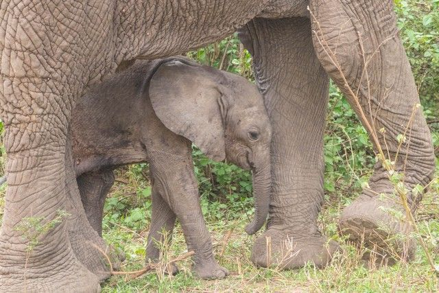safari lago manyara tanzania (24)
