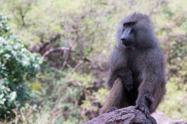 safari lago manyara tanzania (3)