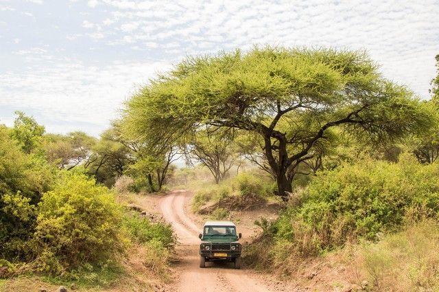 safari lago manyara tanzania (4)