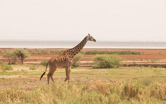safari lago manyara tanzania (9)
