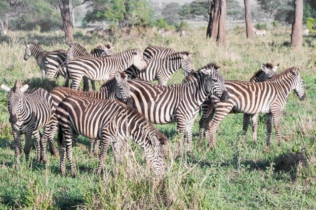 tarangire national park safari de mañana tanzania (4)