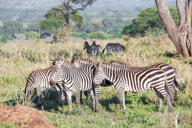 tarangire national park safari de mañana tanzania (5)