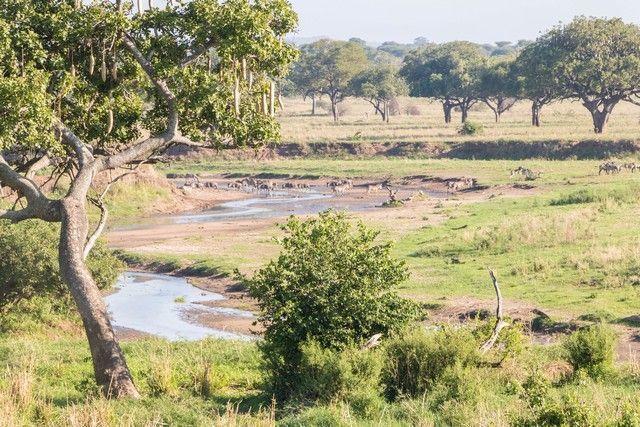 tarangire national park safari de mañana tanzania (6)