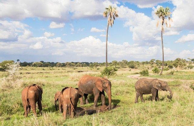 tarangire national park tanzania (15)