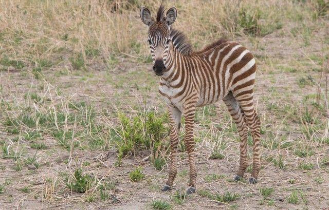 tarangire national park tanzania (2)