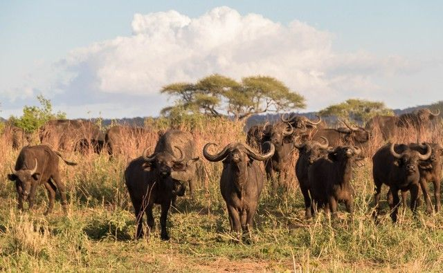 tarangire national park tanzania (25)
