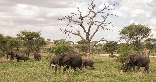tarangire national park tanzania (9)