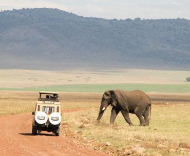 Parque nacional del ngorongoro portada