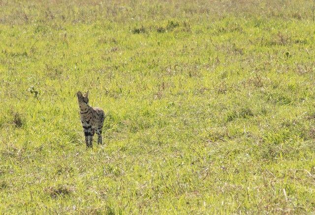 area de conservacion del ngorongoro tanzania (1)