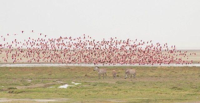 area de conservacion del ngorongoro tanzania (18)