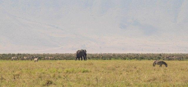 area de conservacion del ngorongoro tanzania (2)