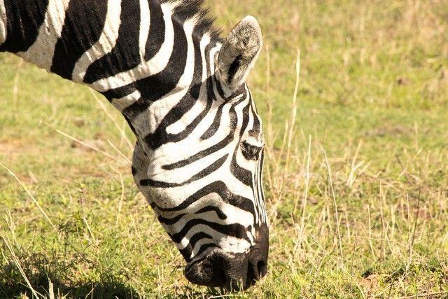 area de conservacion del ngorongoro tanzania (6)