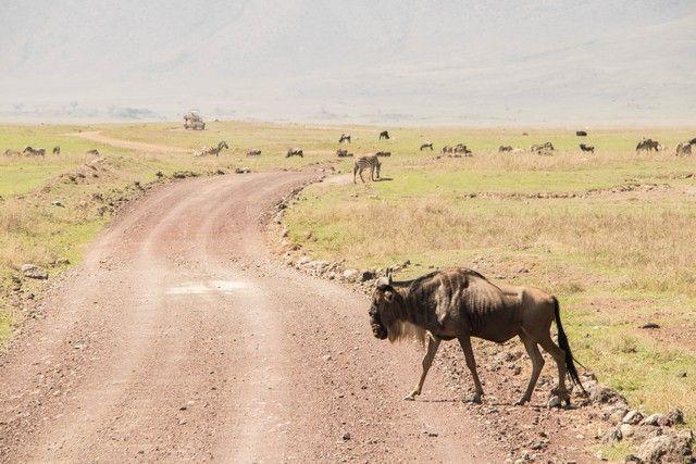 area de conservacion del ngorongoro tanzania (9)