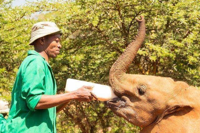 david sheldrick un dia en nairobi (4)
