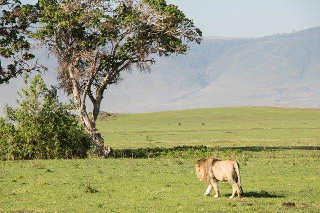 ngorongoro area de conservacion tanzania (12)