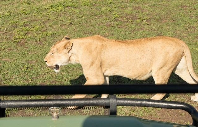 ngorongoro area de conservacion tanzania (13)
