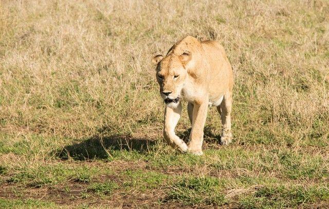 ngorongoro area de conservacion tanzania (14)