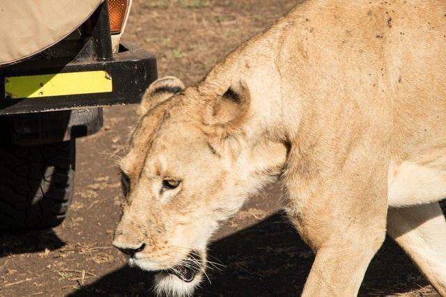 ngorongoro area de conservacion tanzania (16)