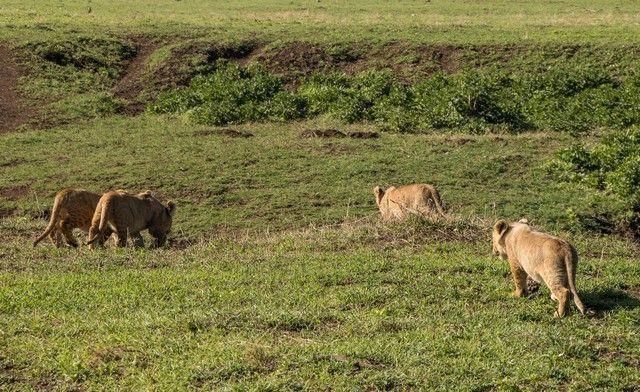ngorongoro area de conservacion tanzania (20)