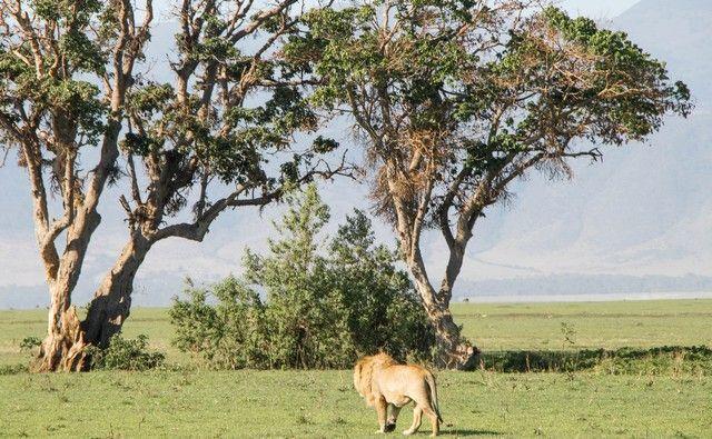 ngorongoro area de conservacion tanzania (23)
