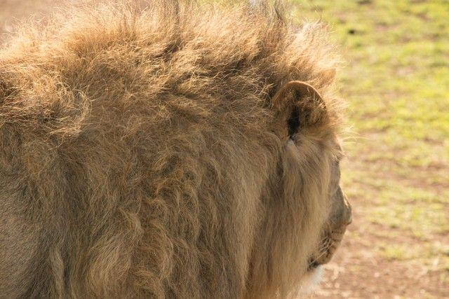 ngorongoro area de conservacion tanzania (31)