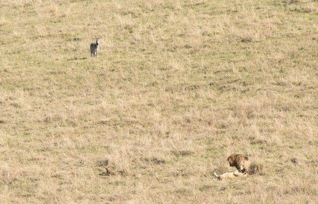 ngorongoro area de conservacion tanzania (7)
