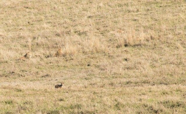 ngorongoro area de conservacion tanzania (8)