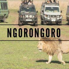 Ngorongoro y el arca de Noé