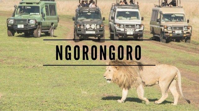 portada ngorongoro tanzania