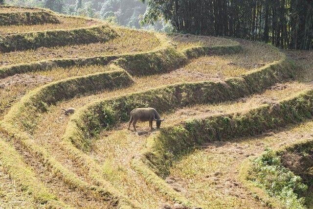 trekking por sapa en un día vietnam (13)