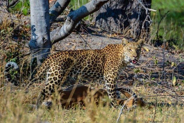 botswana safari de lujo 2