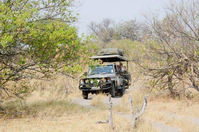 botswana safari de lujo