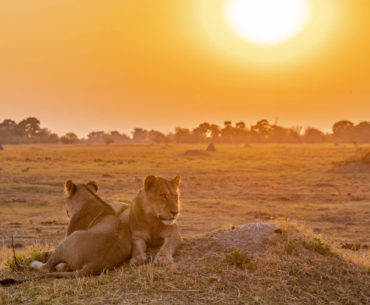 botswana viaje al corazon de africa portada
