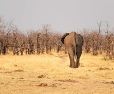 informacion para viajar a botswana portada