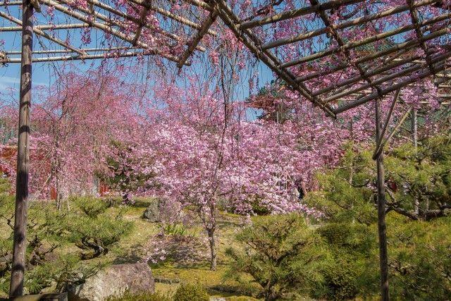 jardines santuario heian kioto japon (3)