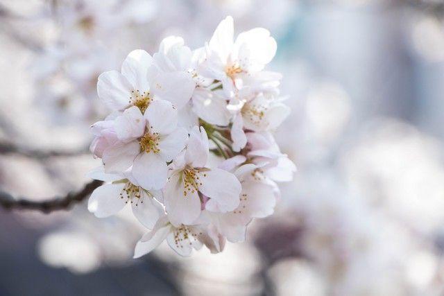 paseo de la filosofia kioto japon (1)