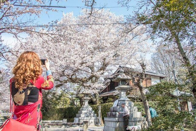 paseo de la filosofia kioto japon (13)