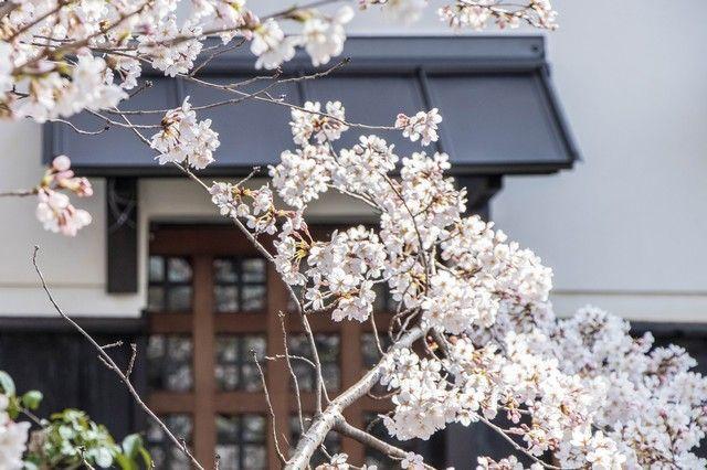 paseo de la filosofia kioto japon (2)