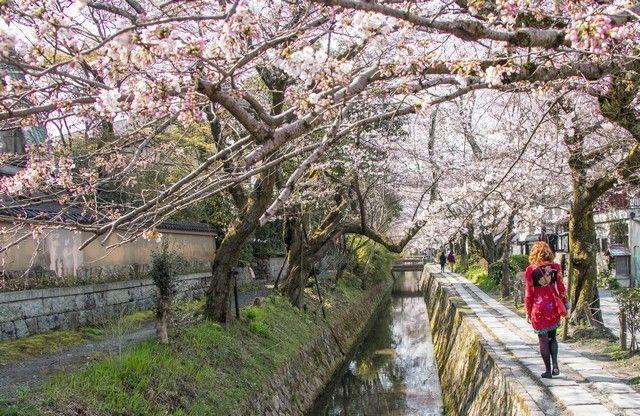paseo de la filosofia kioto japon (8)