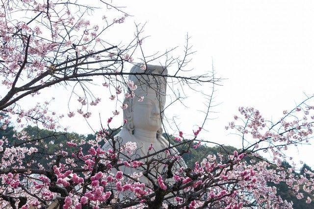 paseo por kioto de kiyomizudera a gion (34)
