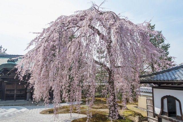 paseo por kioto de kiyomizudera a gion (43)