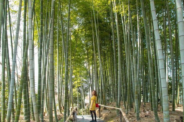 paseo por kioto de kiyomizudera a gion (45)
