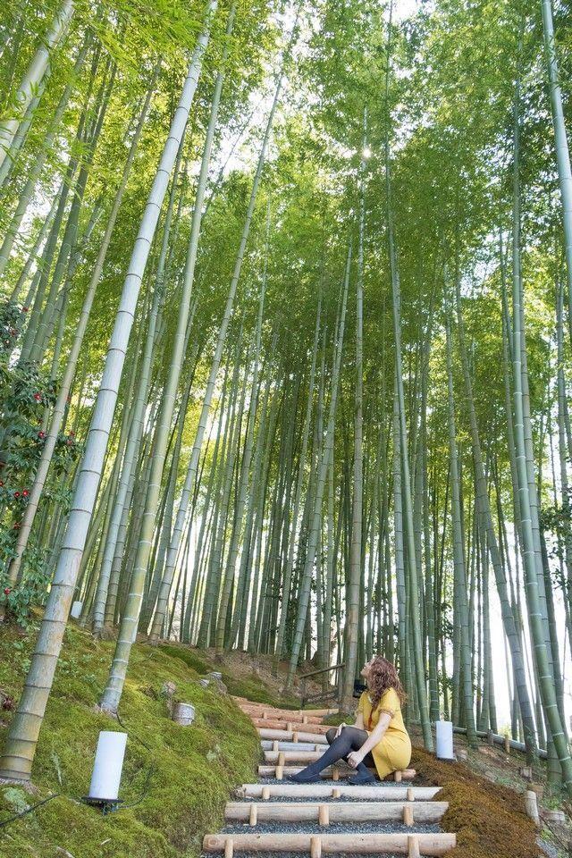 paseo por kioto de kiyomizudera a gion (47)