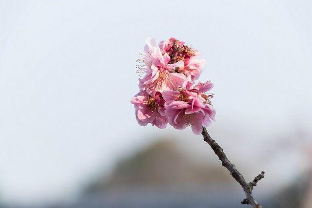 paseo por kioto de kiyomizudera a gion (5)