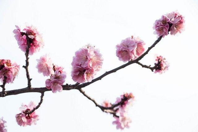 paseo por kioto de kiyomizudera a gion (6)