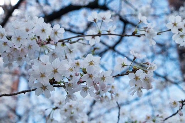paseo por kioto de kiyomizudera a gion (61)