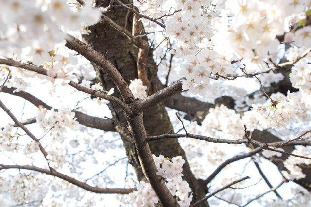 paseo por kioto de kiyomizudera a gion (63)