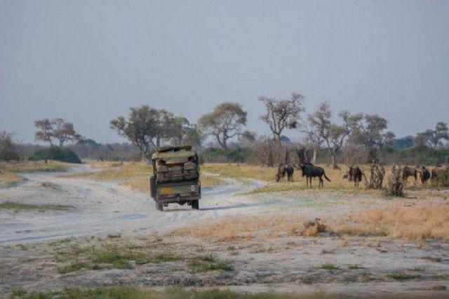 safari en 4x4 botswana